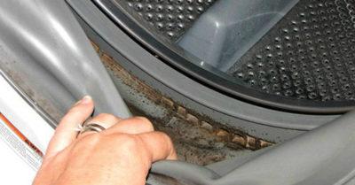 Плесень из стиральной машинки вызывает респираторные заболевания