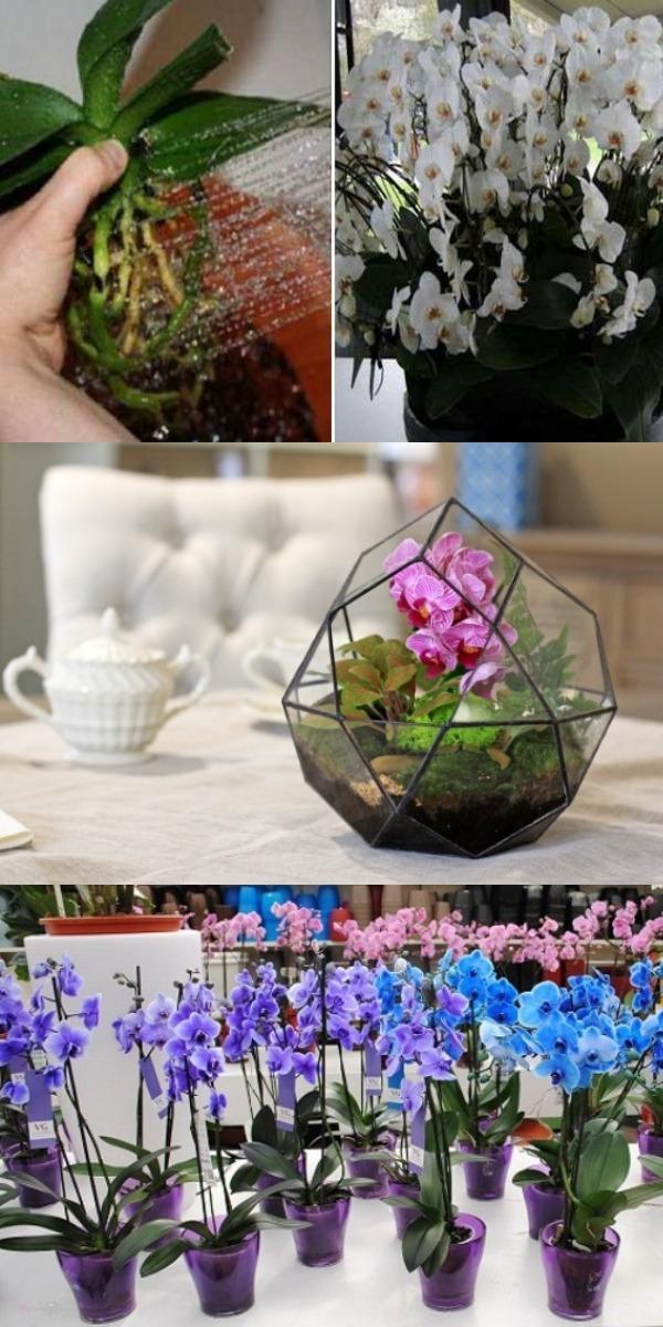 Пересадила орхидеи необычным способом…  Источник httpsprigotovika.ruperesadila-orxidei-neobychnym-sposobom-kogda-gosti-uvideli-moix-krasavic-axnuli