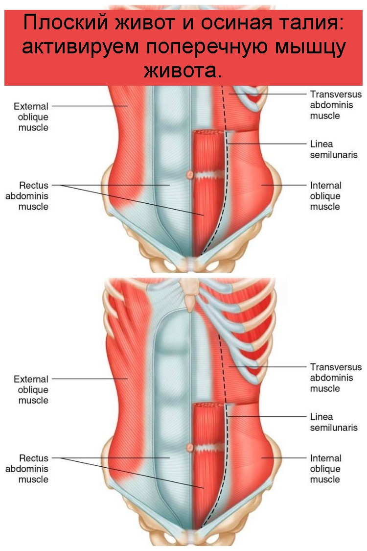 Плоский живот и осиная талия: активируем поперечную мышцу живота 4