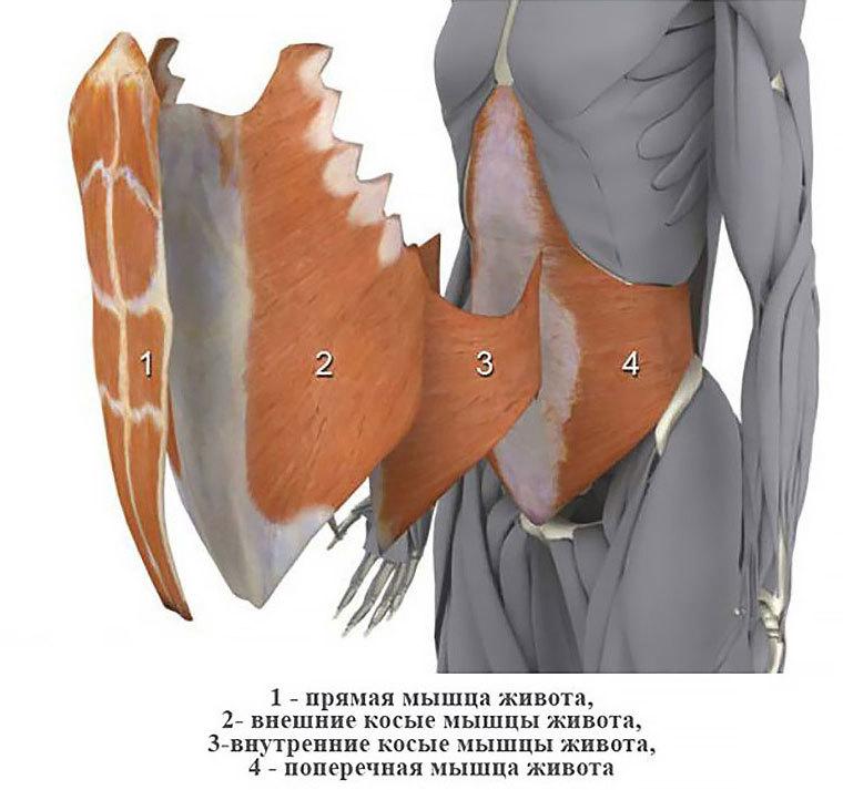 Плоский живот и осиная талия: активируем поперечную мышцу живота 5