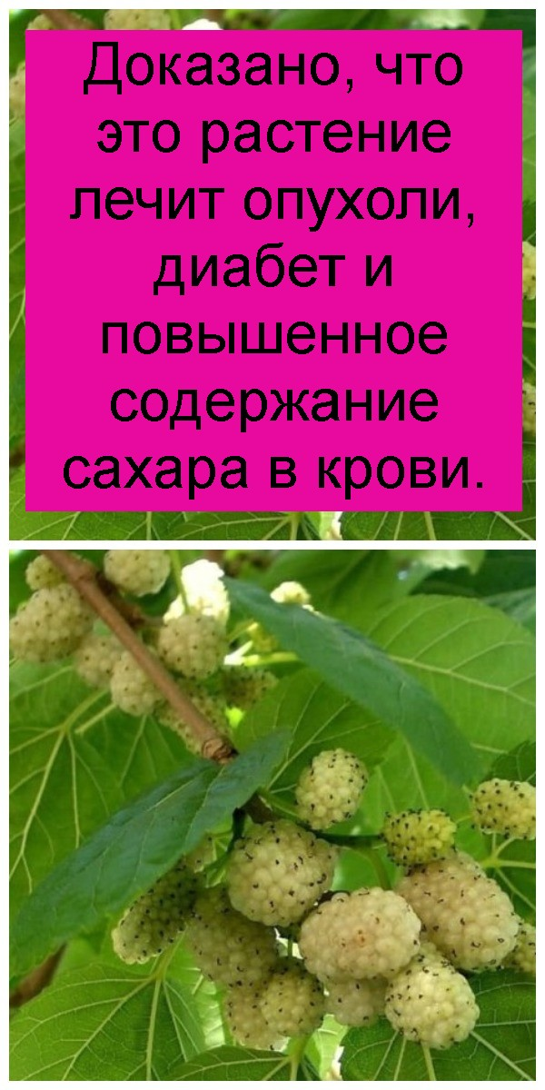 Доказано, что это растение лечит опухоли, диабет и повышенное содержание сахара в крови 4